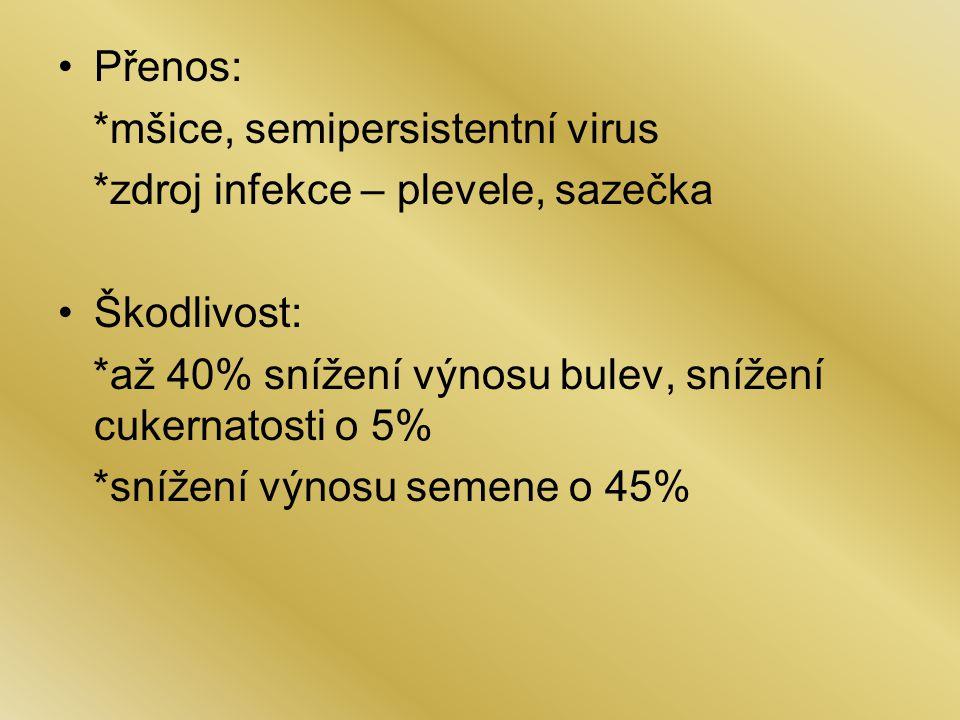 Přenos: *mšice, semipersistentní virus. *zdroj infekce – plevele, sazečka. Škodlivost: *až 40% snížení výnosu bulev, snížení cukernatosti o 5%
