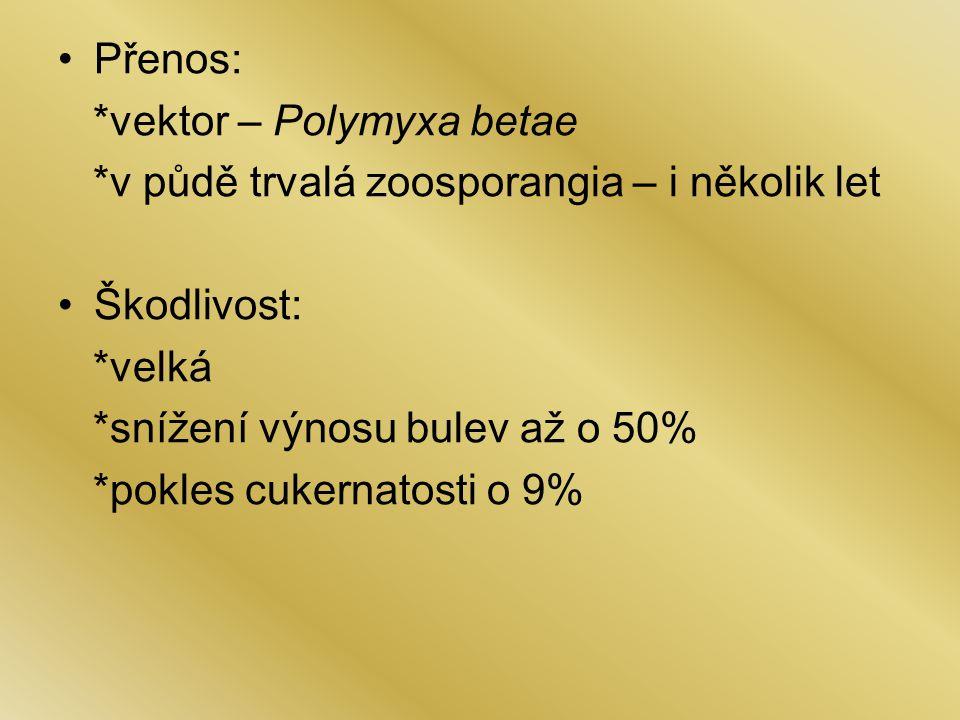 Přenos: *vektor – Polymyxa betae. *v půdě trvalá zoosporangia – i několik let. Škodlivost: *velká.