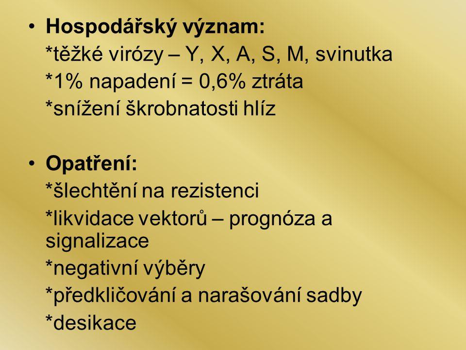Hospodářský význam: *těžké virózy – Y, X, A, S, M, svinutka. *1% napadení = 0,6% ztráta. *snížení škrobnatosti hlíz.