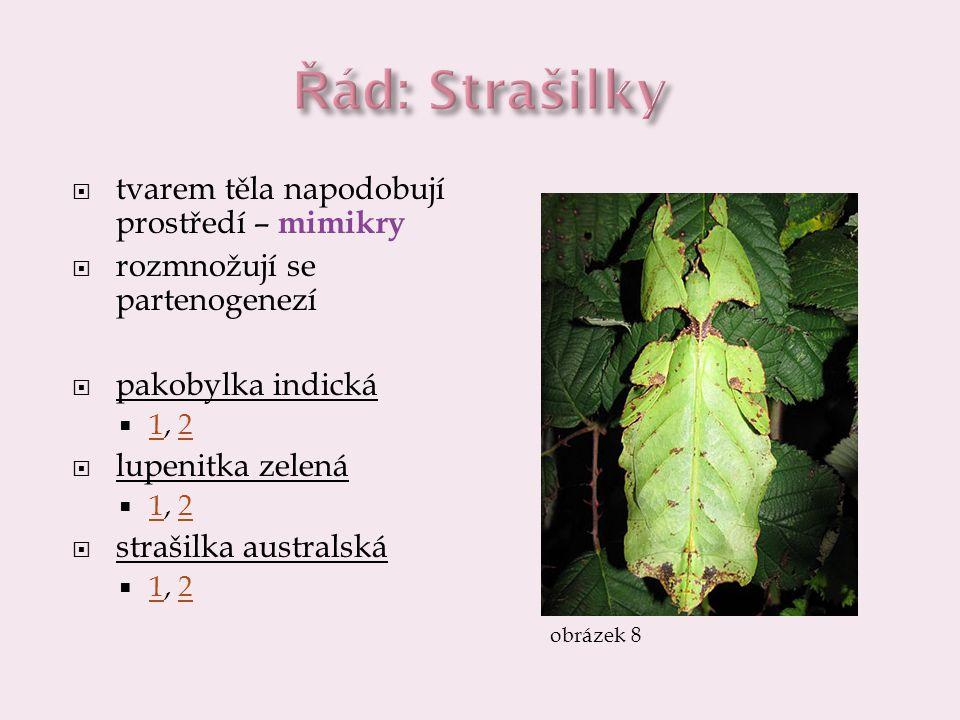 Řád: Strašilky tvarem těla napodobují prostředí – mimikry