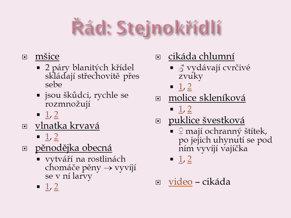 Řád: Stejnokřídlí mšice vlnatka krvavá pěnodějka obecná cikáda chlumní