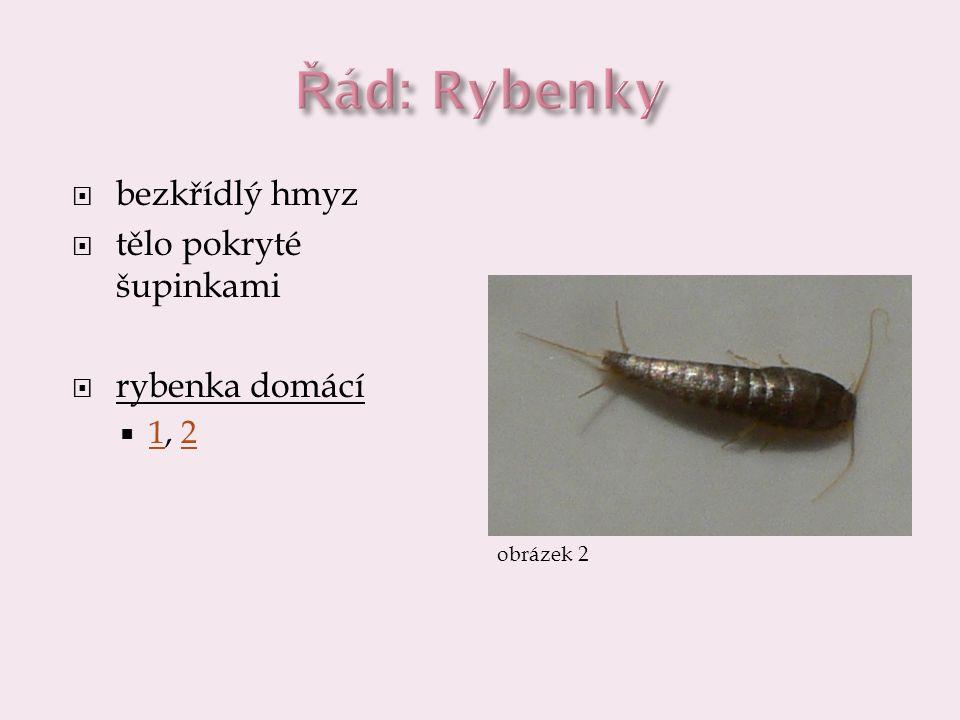 Řád: Rybenky bezkřídlý hmyz tělo pokryté šupinkami rybenka domácí 1, 2