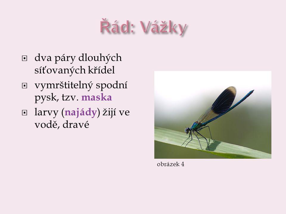 Řád: Vážky dva páry dlouhých síťovaných křídel