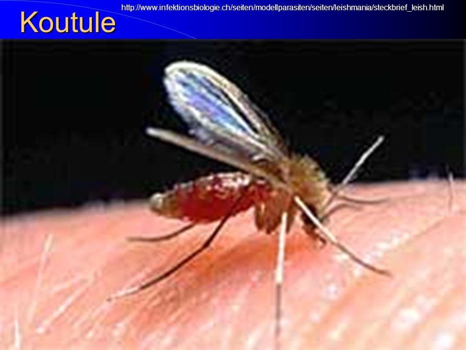 Koutule http://www.infektionsbiologie.ch/seiten/modellparasiten/seiten/leishmania/steckbrief_leish.html.