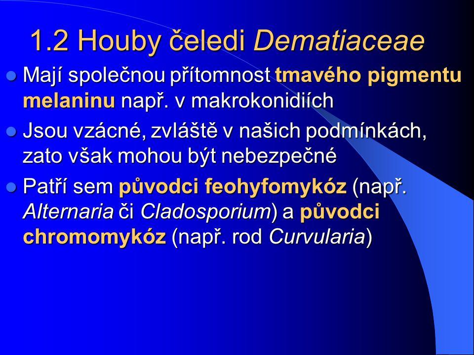 1.2 Houby čeledi Dematiaceae