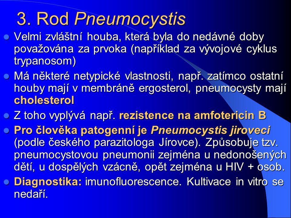 3. Rod Pneumocystis Velmi zvláštní houba, která byla do nedávné doby považována za prvoka (například za vývojové cyklus trypanosom)