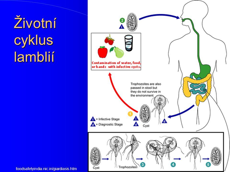 Životní cyklus lamblií