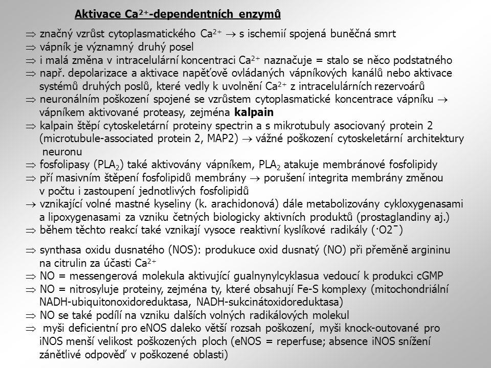 Aktivace Ca2+-dependentních enzymů