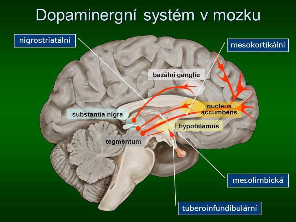 Dopaminergní systém v mozku