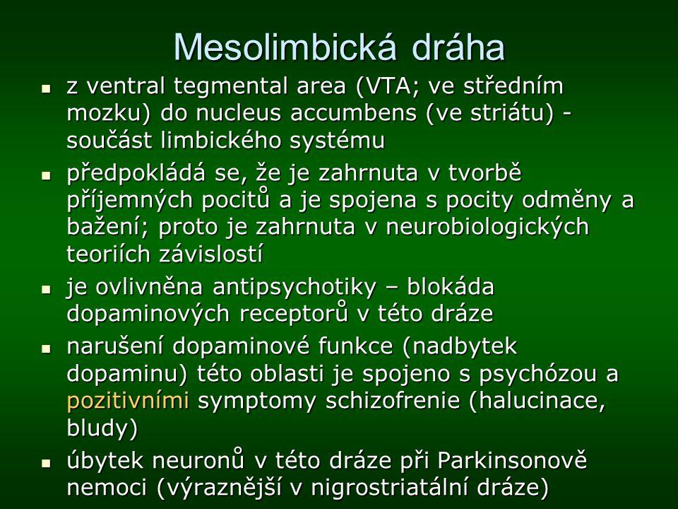 Mesolimbická dráha z ventral tegmental area (VTA; ve středním mozku) do nucleus accumbens (ve striátu) - součást limbického systému.