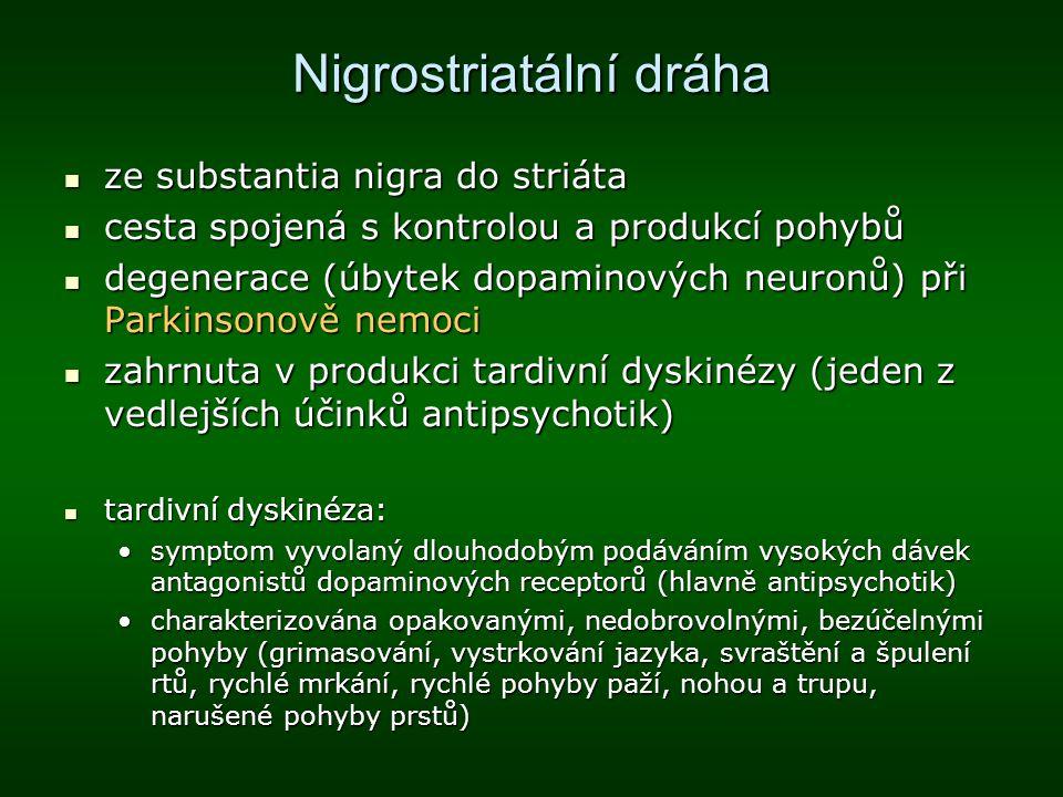 Nigrostriatální dráha