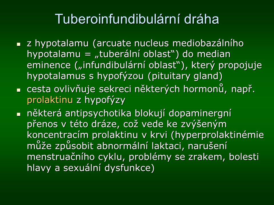 Tuberoinfundibulární dráha
