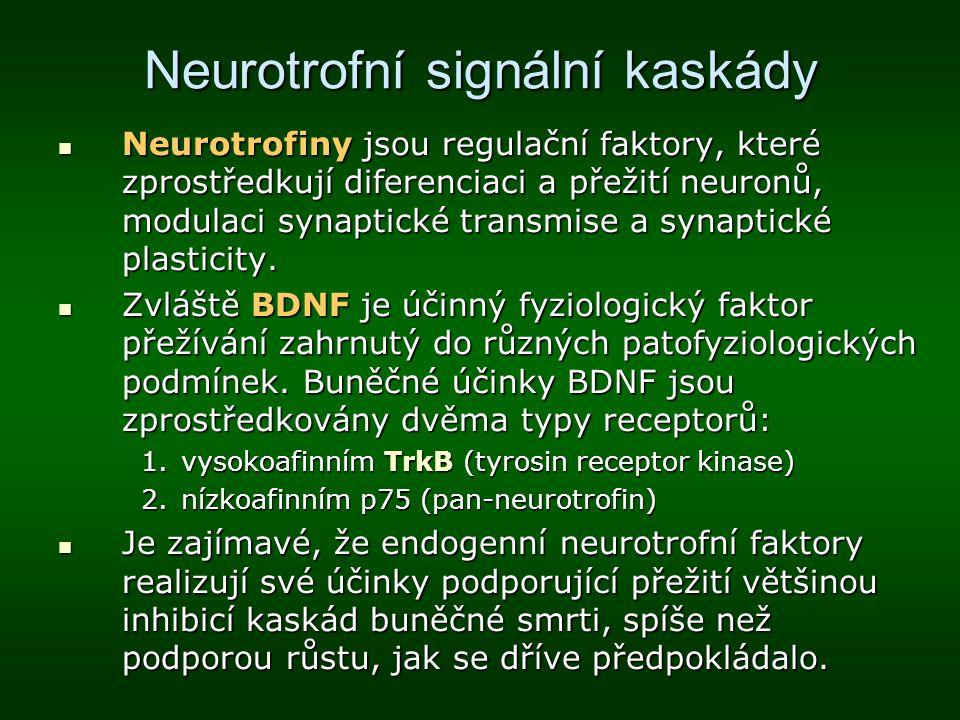 Neurotrofní signální kaskády