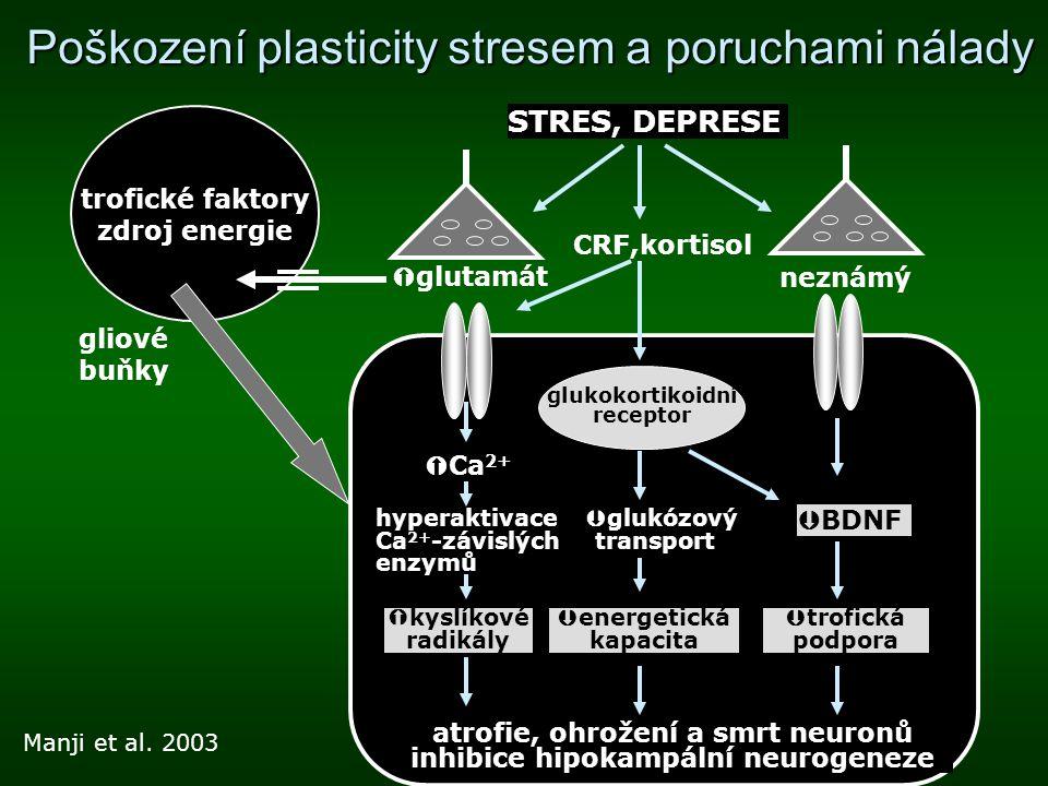 Poškození plasticity stresem a poruchami nálady