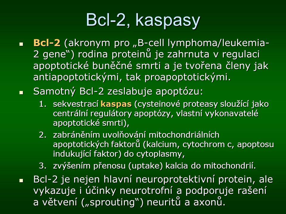 Bcl-2, kaspasy