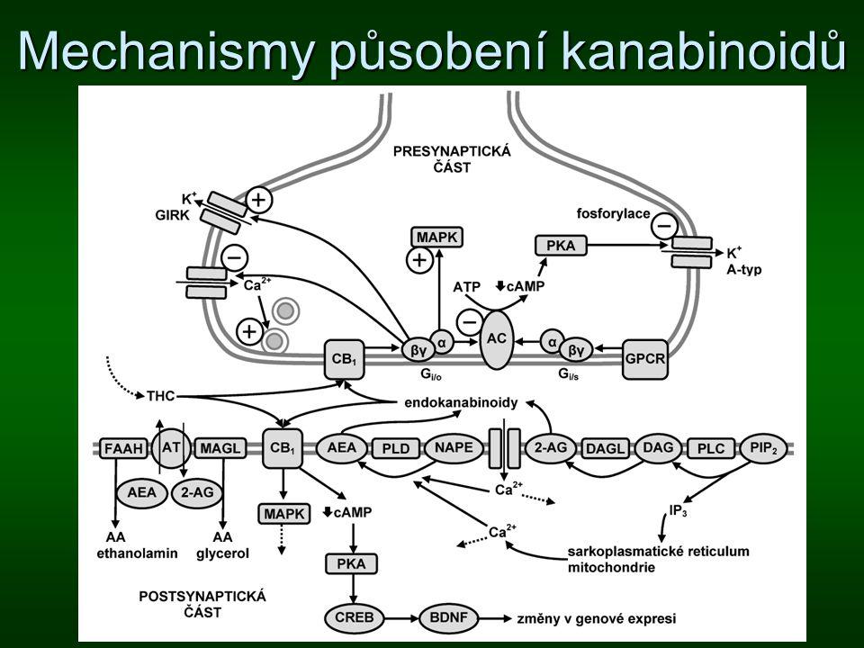 Mechanismy působení kanabinoidů