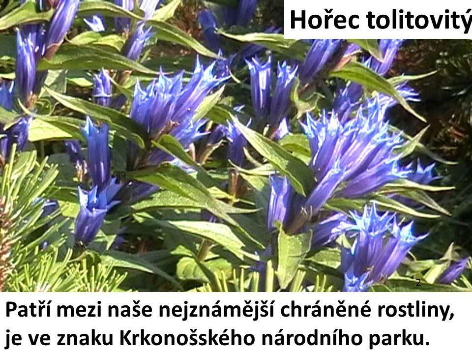Hořec tolitovitý Patří mezi naše nejznámější chráněné rostliny,
