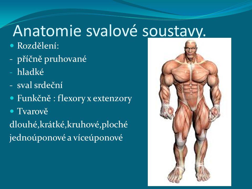 Anatomie svalové soustavy.