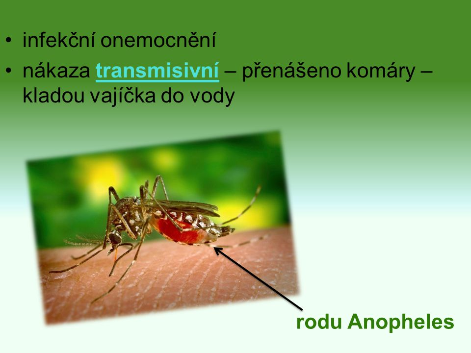 infekční onemocnění nákaza transmisivní – přenášeno komáry – kladou vajíčka do vody rodu Anopheles