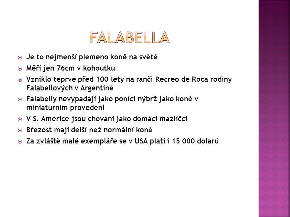 Falabella Je to nejmenší plemeno koně na světě
