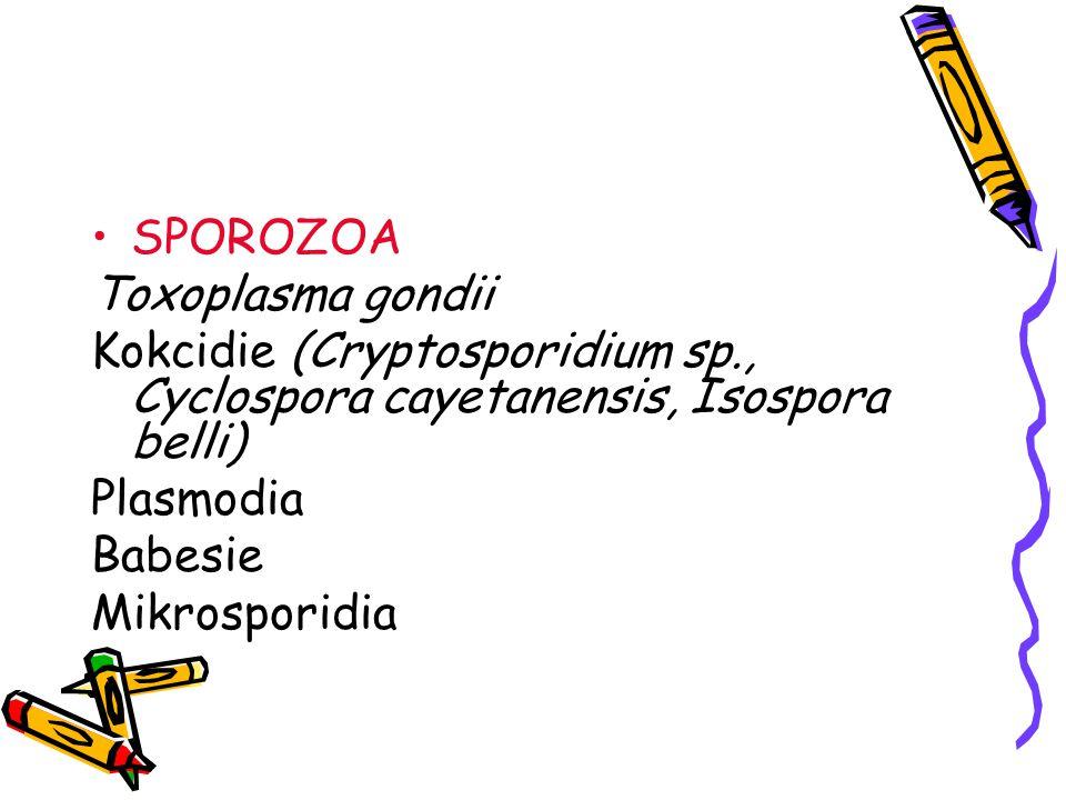 SPOROZOA Toxoplasma gondii. Kokcidie (Cryptosporidium sp., Cyclospora cayetanensis, Isospora belli)