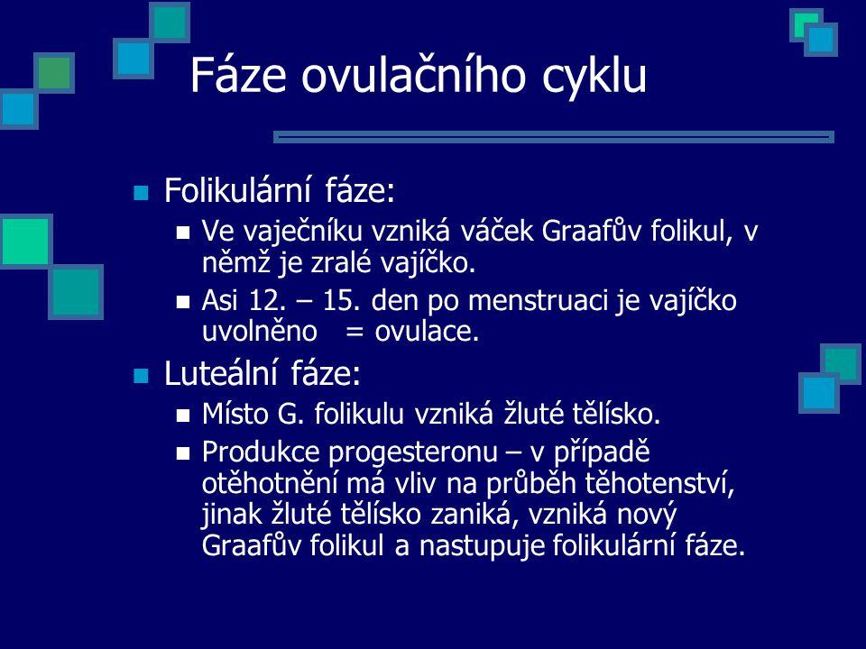 Fáze ovulačního cyklu Folikulární fáze: Luteální fáze: