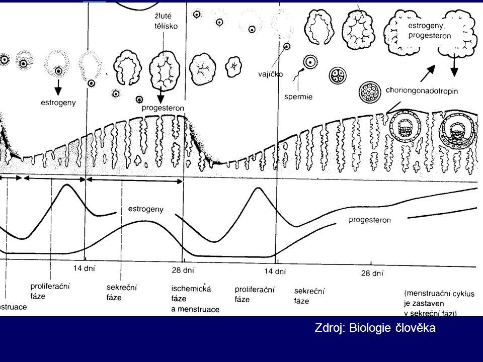 Zdroj: Biologie člověka