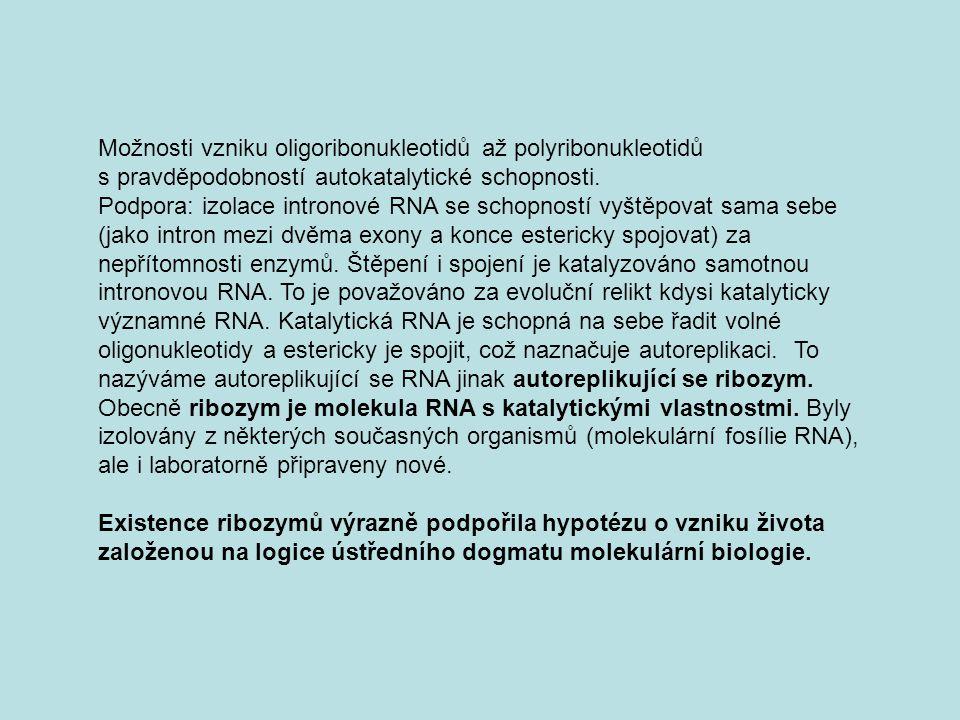 Možnosti vzniku oligoribonukleotidů až polyribonukleotidů s pravděpodobností autokatalytické schopnosti.