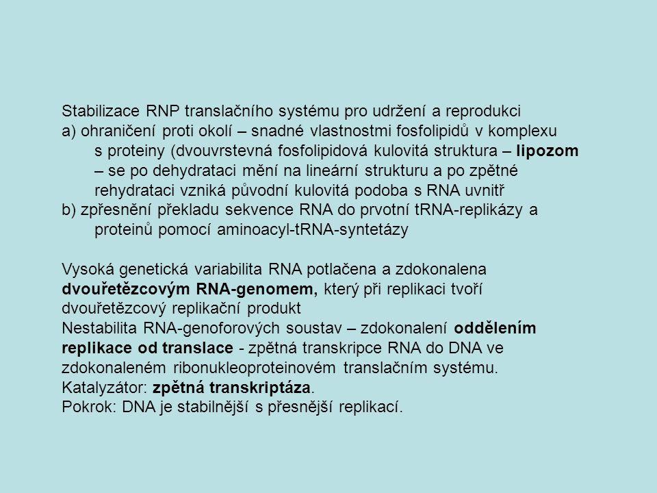 Stabilizace RNP translačního systému pro udržení a reprodukci