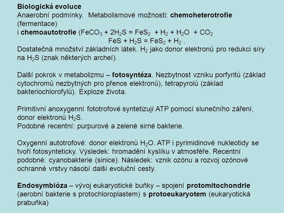 Biologická evoluce Anaerobní podmínky. Metabolismové možnosti: chemoheterotrofie (fermentace)