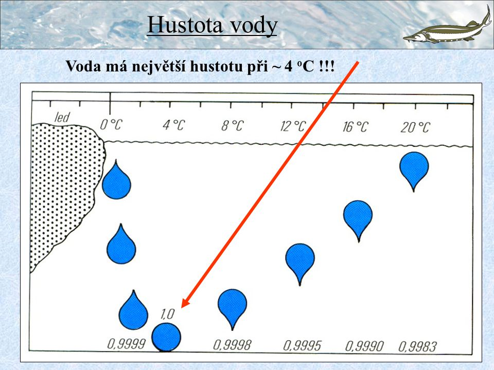 Hustota vody Voda má největší hustotu při ~ 4 oC !!!