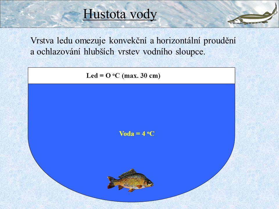 Hustota vody Vrstva ledu omezuje konvekční a horizontální proudění