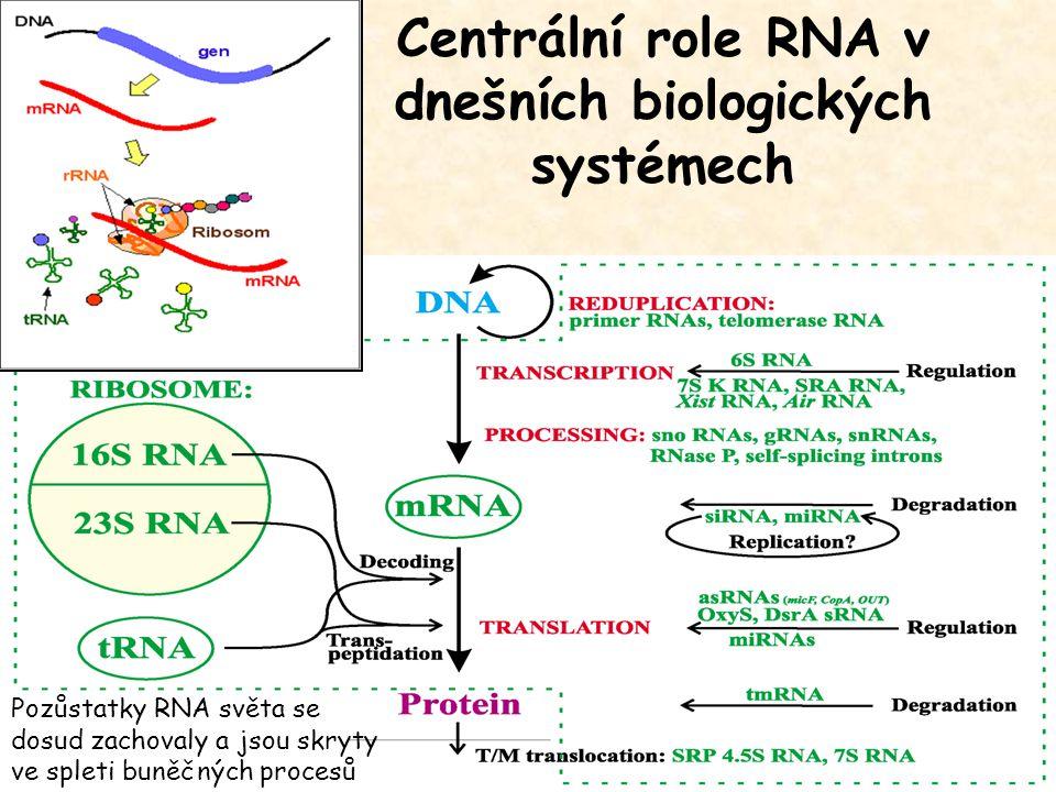 Centrální role RNA v dnešních biologických systémech