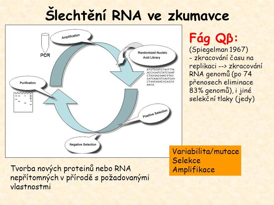 Šlechtění RNA ve zkumavce