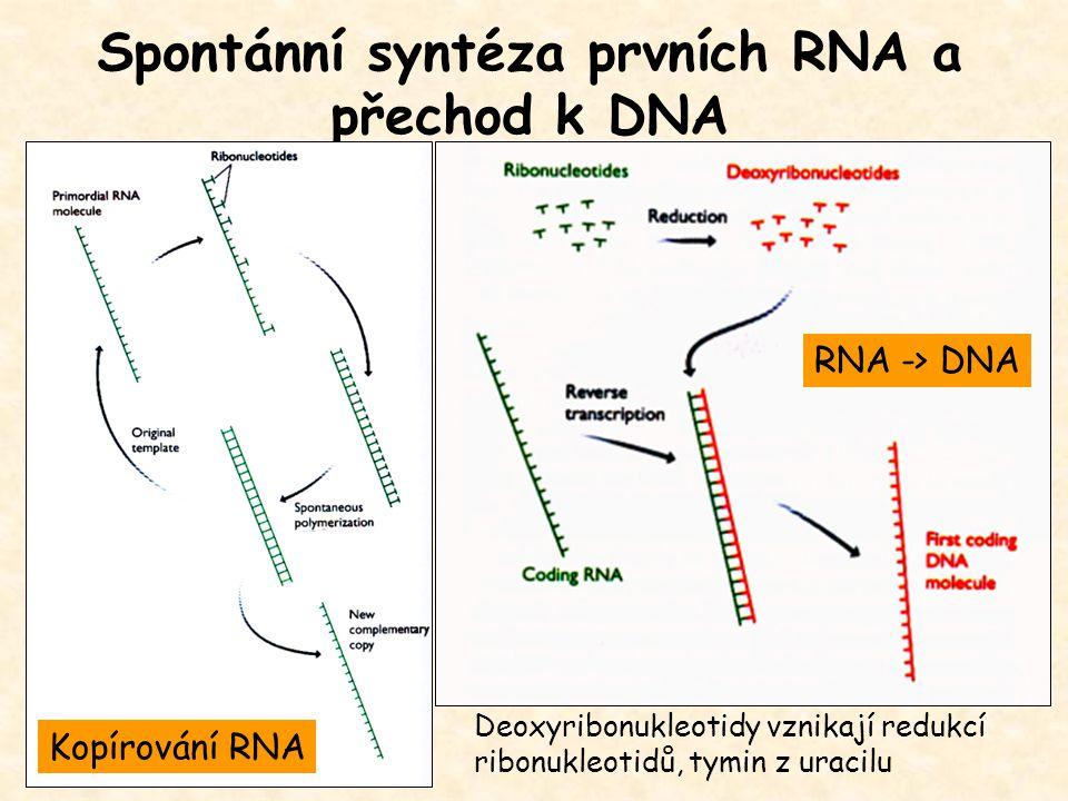 Spontánní syntéza prvních RNA a přechod k DNA