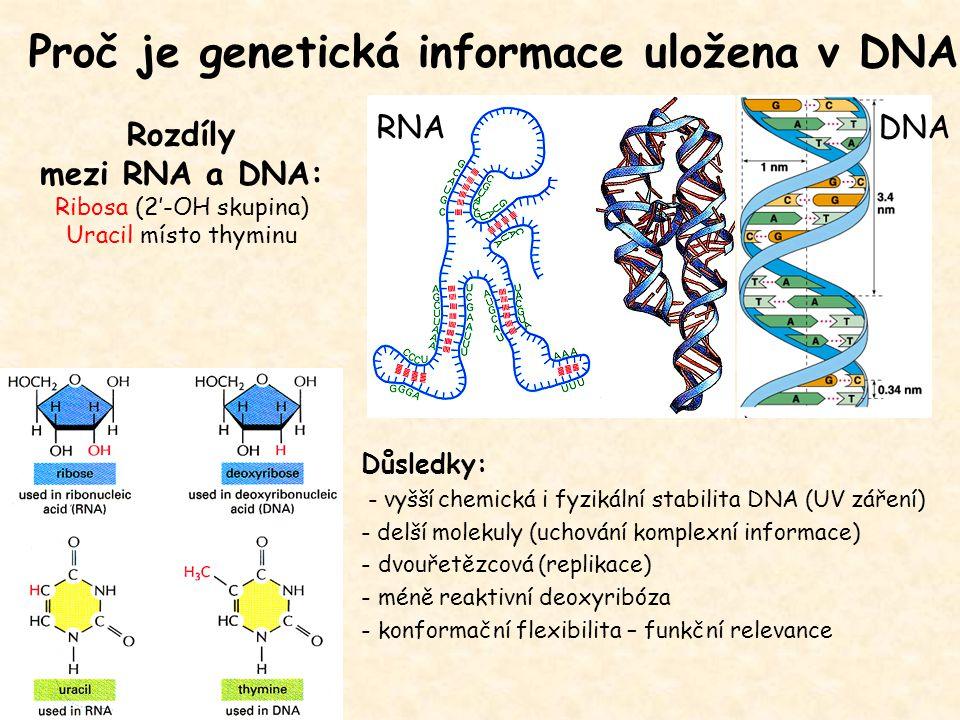 Proč je genetická informace uložena v DNA
