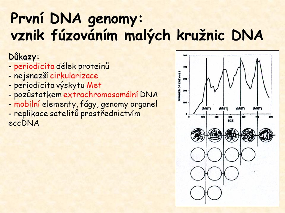 vznik fúzováním malých kružnic DNA