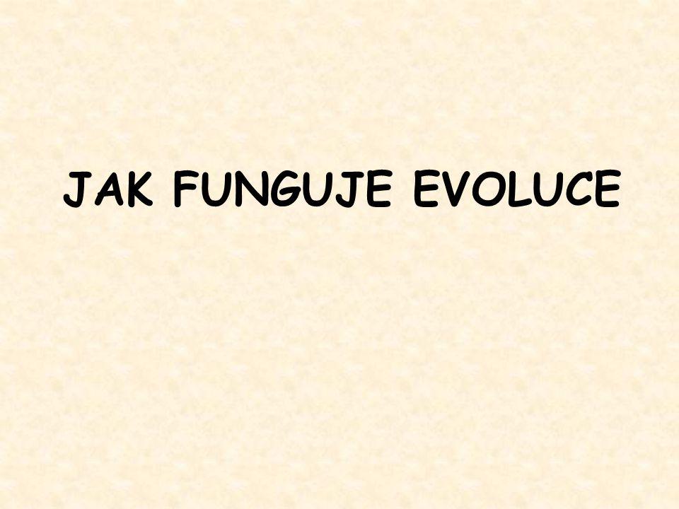 JAK FUNGUJE EVOLUCE