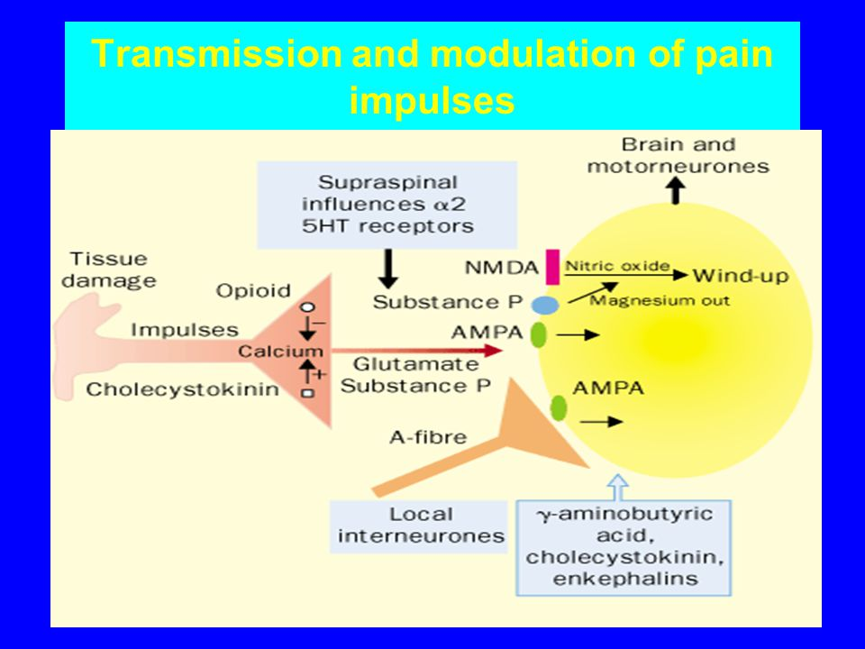 Transmission and modulation of pain impulses