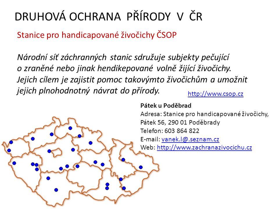 DRUHOVÁ OCHRANA PŘÍRODY V ČR