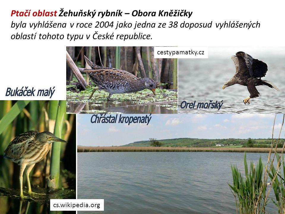 Ptačí oblast Žehuňský rybník – Obora Kněžičky