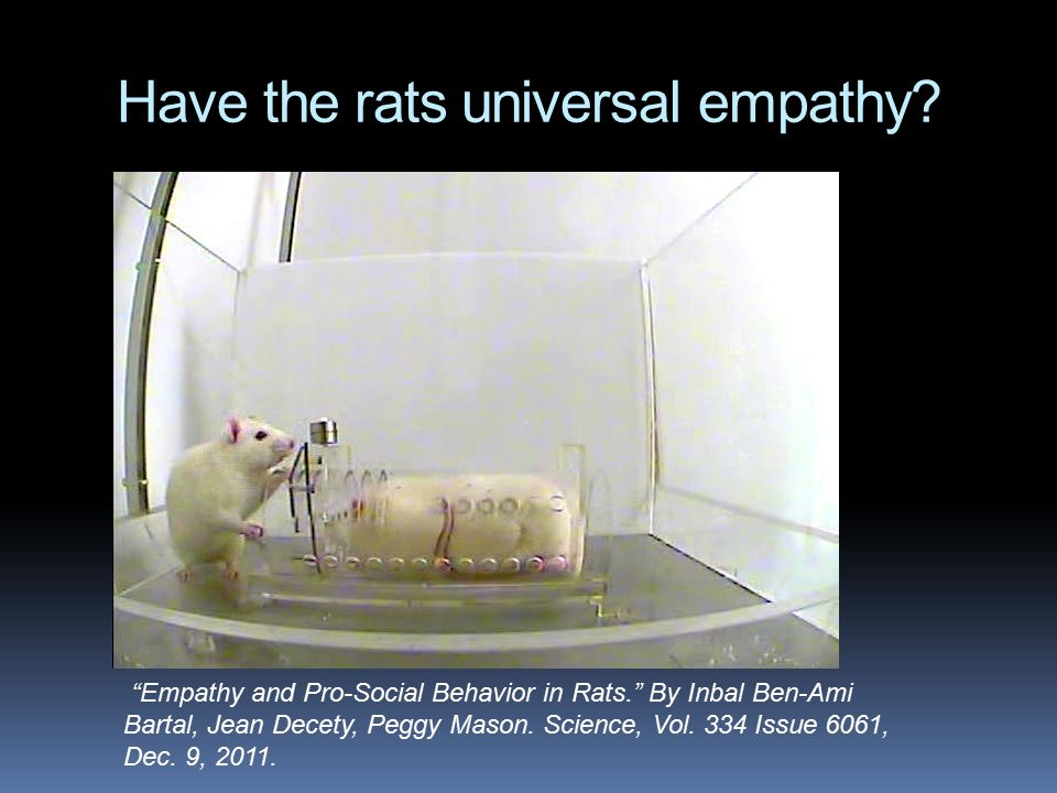 Have the rats universal empathy