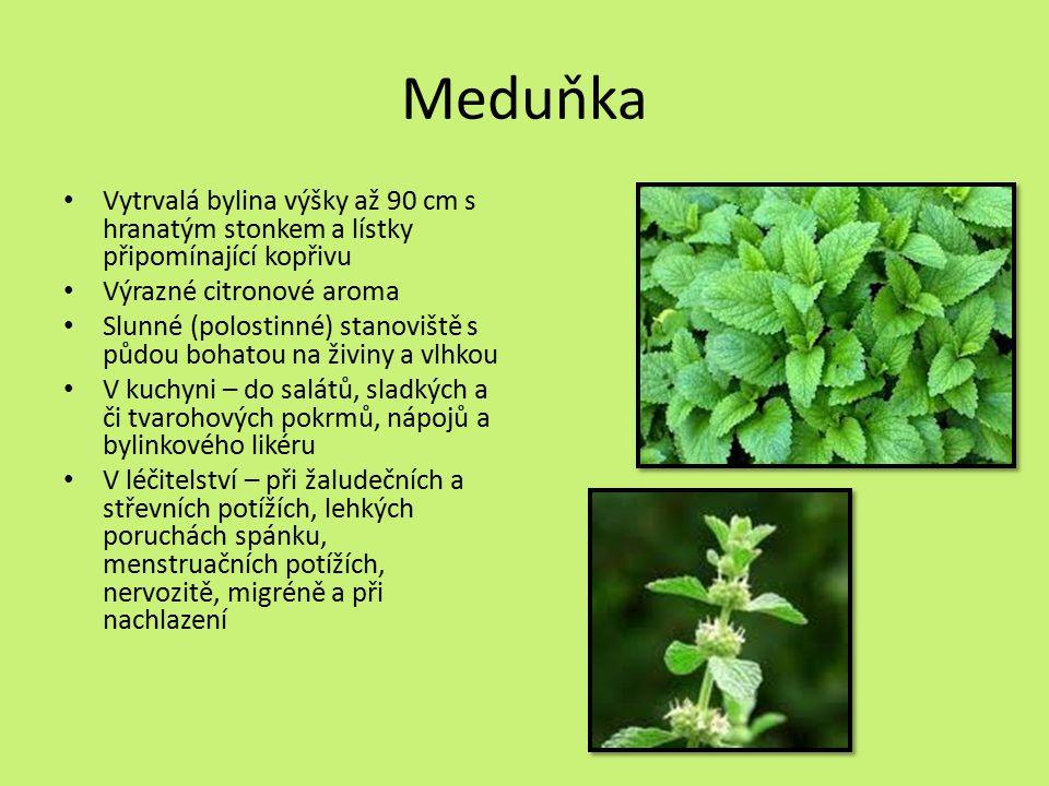 Meduňka Vytrvalá bylina výšky až 90 cm s hranatým stonkem a lístky připomínající kopřivu. Výrazné citronové aroma.