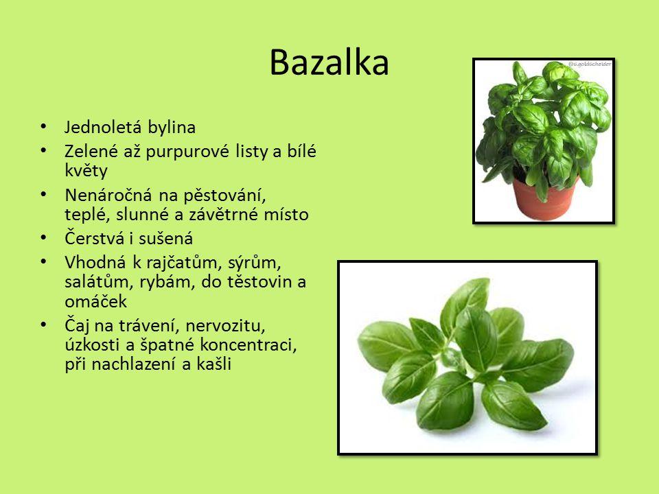 Bazalka Jednoletá bylina Zelené až purpurové listy a bílé květy