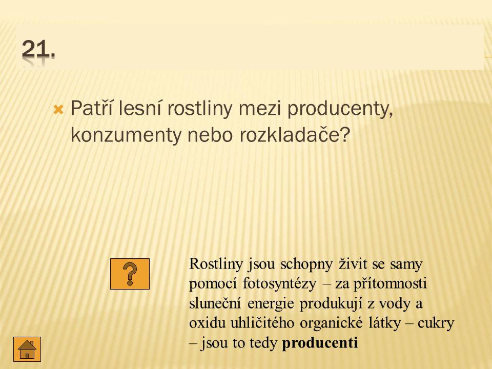 21. Patří lesní rostliny mezi producenty, konzumenty nebo rozkladače