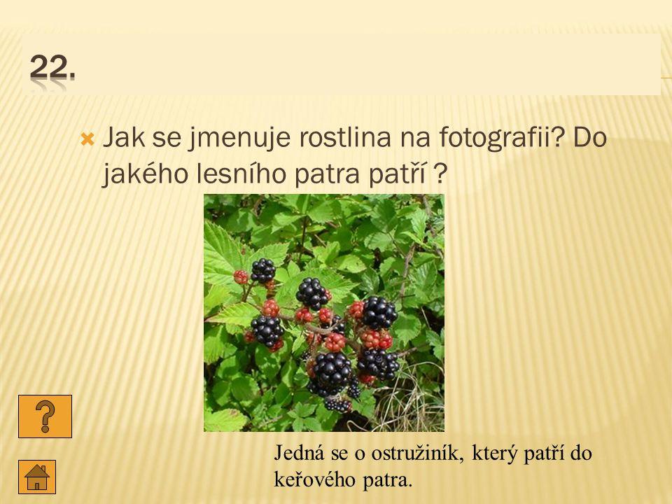 22. Jak se jmenuje rostlina na fotografii. Do jakého lesního patra patří .