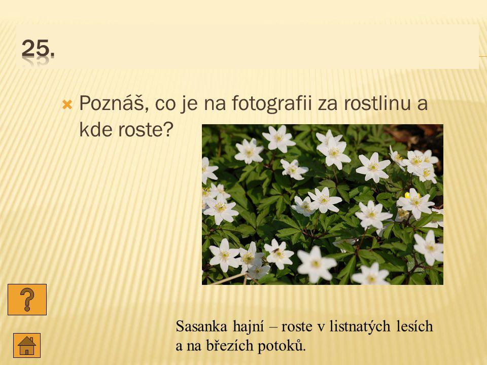 25. Poznáš, co je na fotografii za rostlinu a kde roste