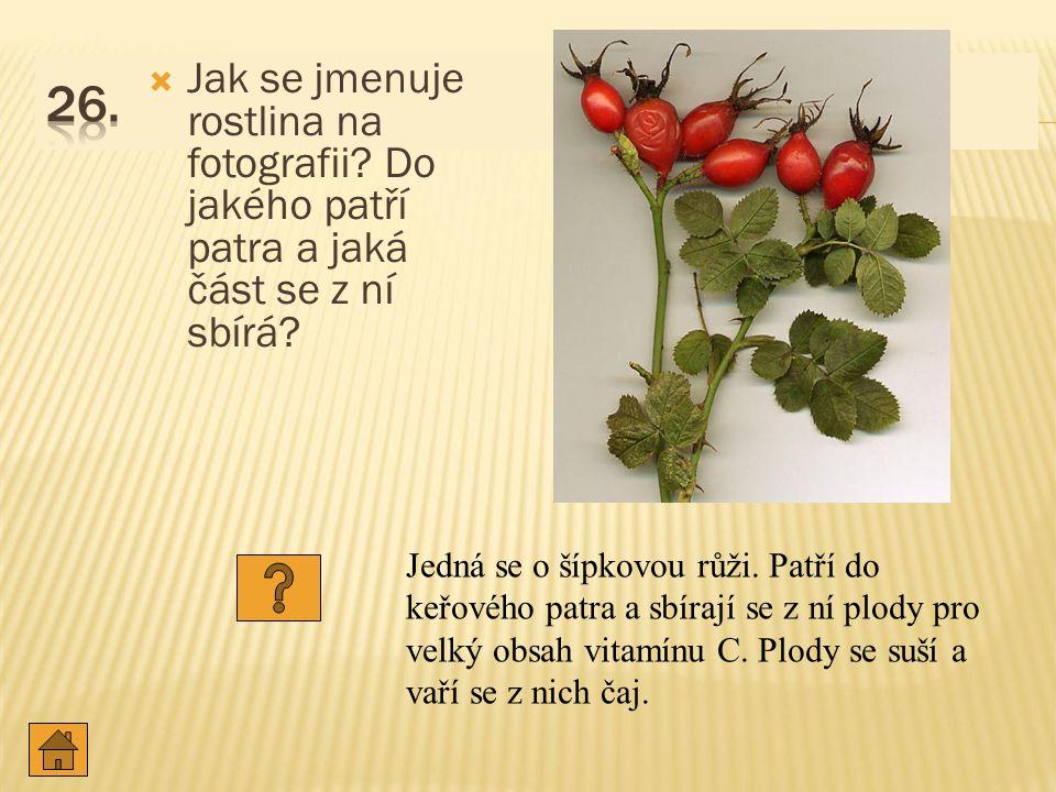 26. Jak se jmenuje rostlina na fotografii Do jakého patří patra a jaká část se z ní sbírá