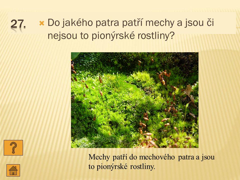 27. Do jakého patra patří mechy a jsou či nejsou to pionýrské rostliny.