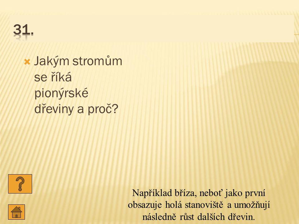 31. Jakým stromům se říká pionýrské dřeviny a proč